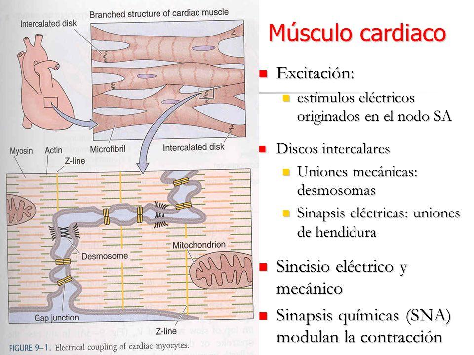 Músculo cardiaco Excitación: Sincisio eléctrico y mecánico