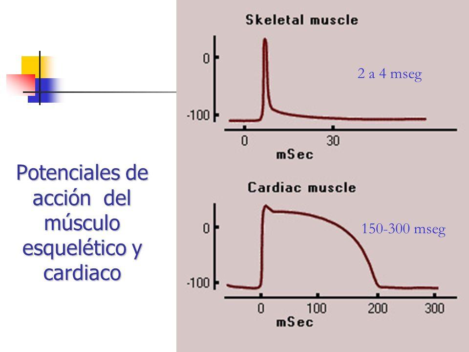 Potenciales de acción del músculo esquelético y cardiaco