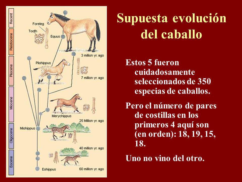 Supuesta evolución del caballo