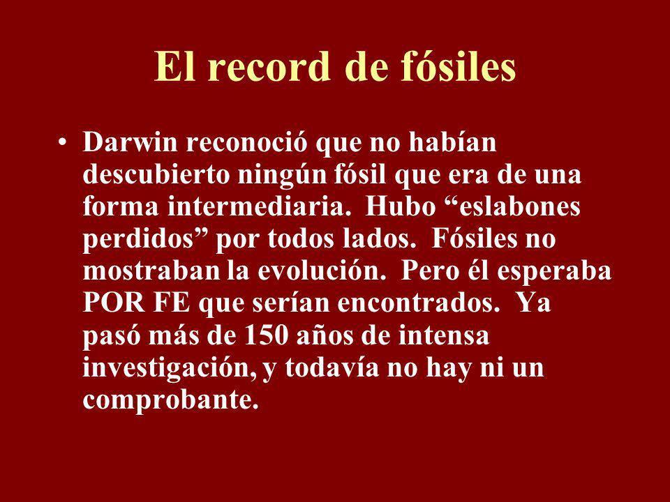 El record de fósiles