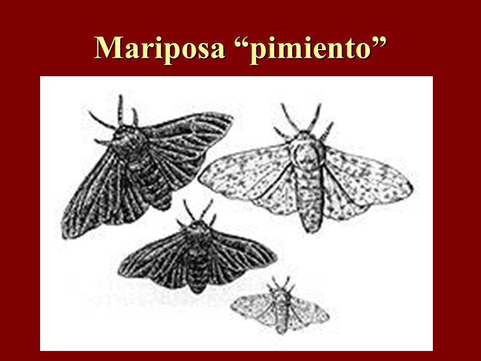 Mariposa pimiento