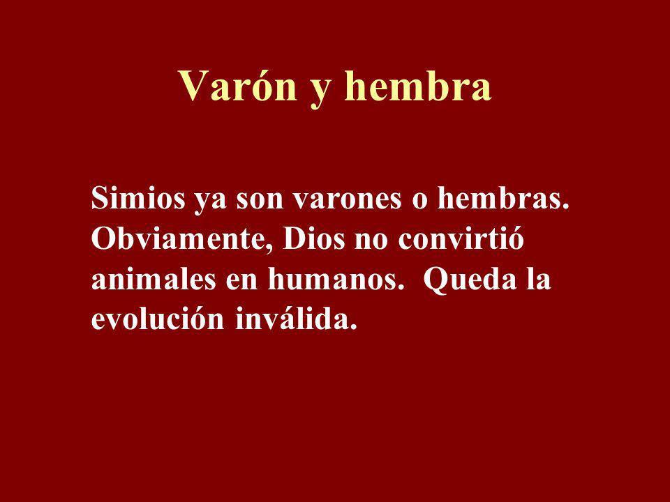 Varón y hembra Simios ya son varones o hembras. Obviamente, Dios no convirtió animales en humanos.