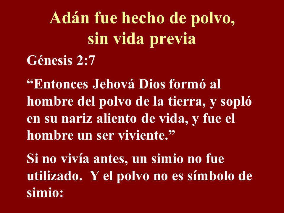 Adán fue hecho de polvo, sin vida previa