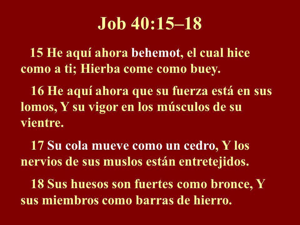 Job 40:15–18 15 He aquí ahora behemot, el cual hice como a ti; Hierba come como buey.