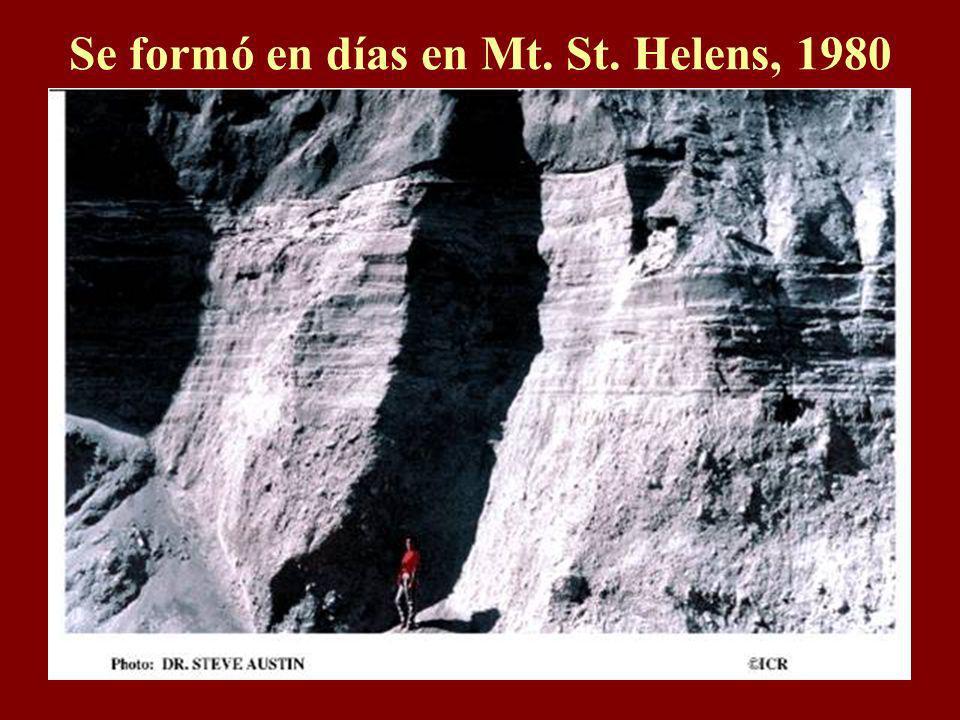 Se formó en días en Mt. St. Helens, 1980