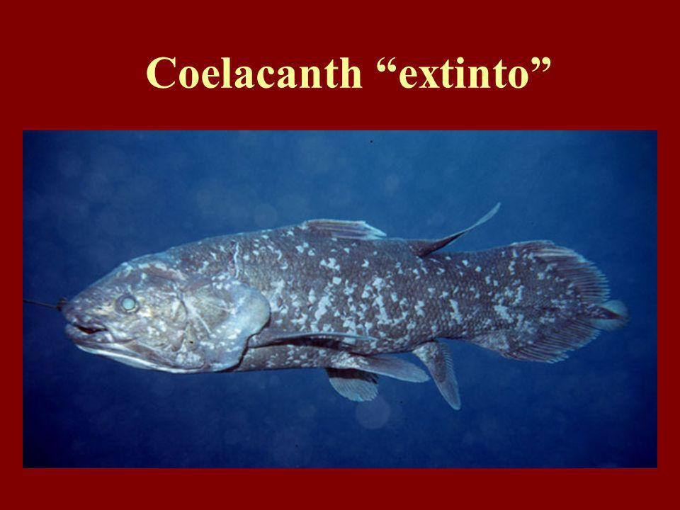 Coelacanth extinto