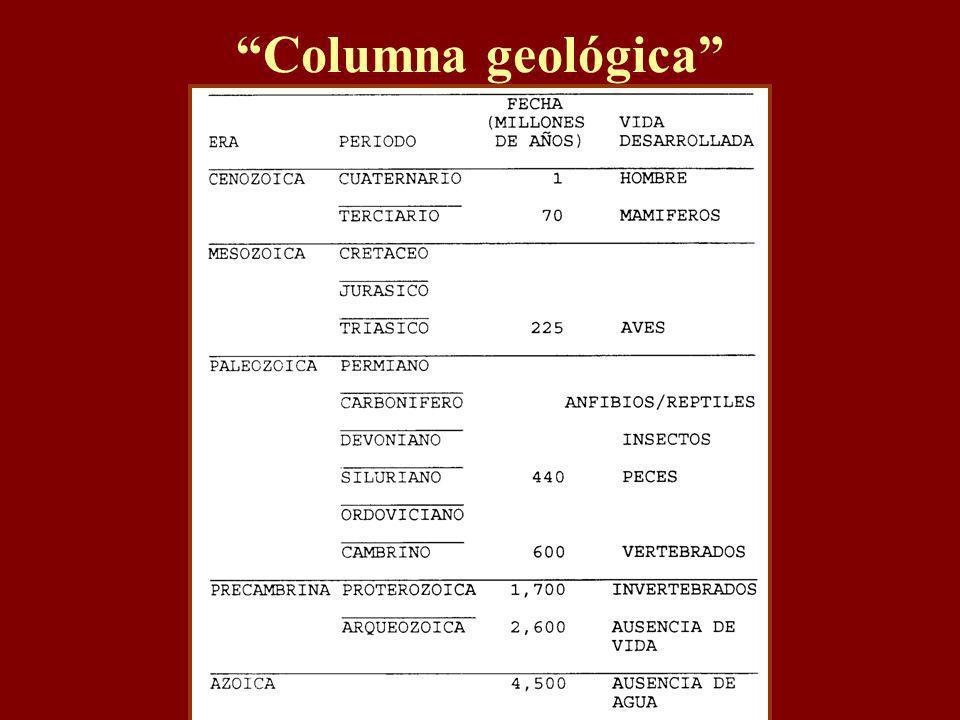 Columna geológica