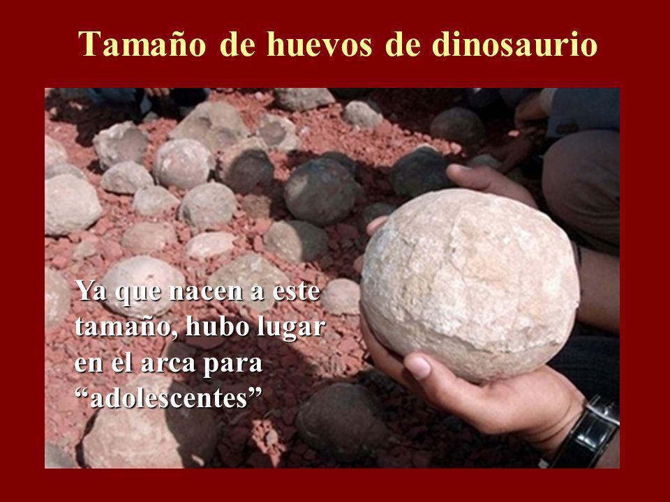 Tamaño de huevos de dinosaurio