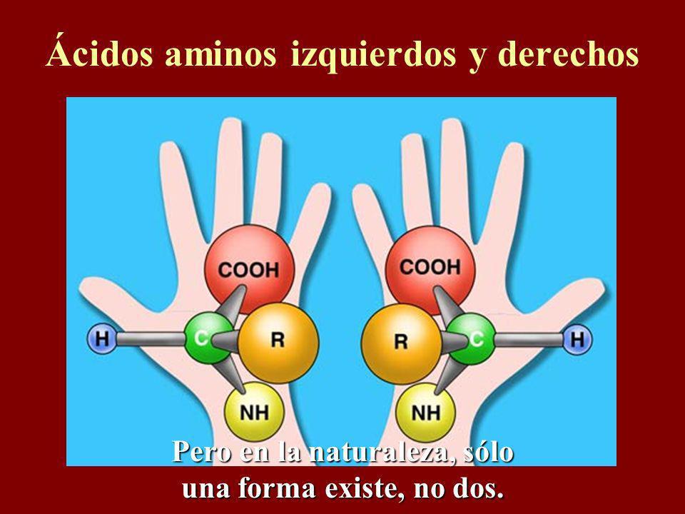 Ácidos aminos izquierdos y derechos