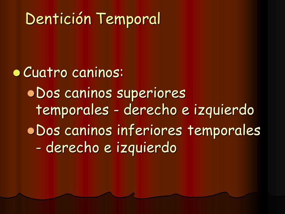 Dentición Temporal Cuatro caninos: