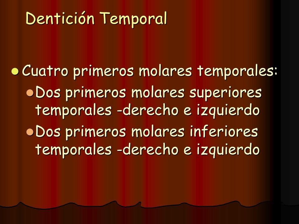 Dentición Temporal Cuatro primeros molares temporales: