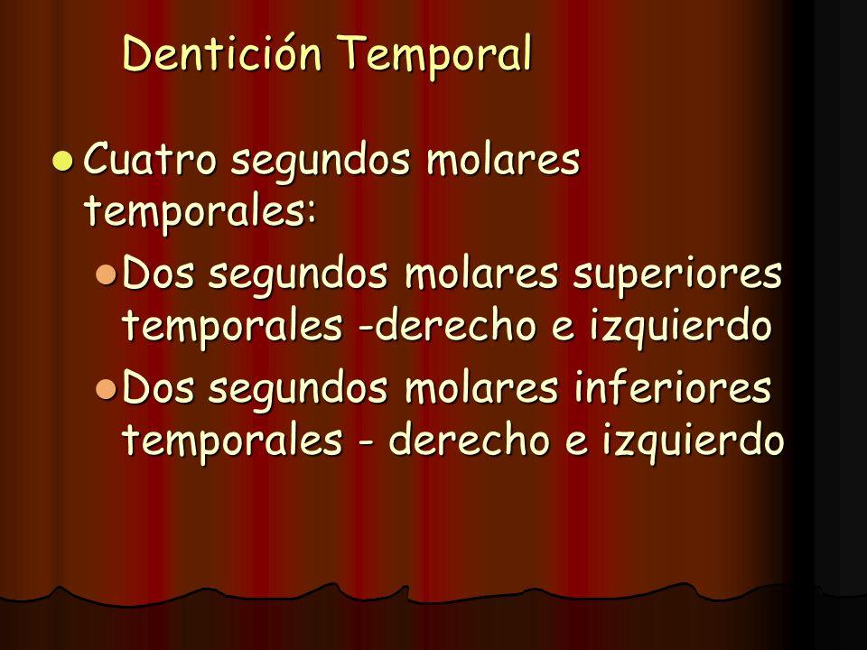 Dentición Temporal Cuatro segundos molares temporales: