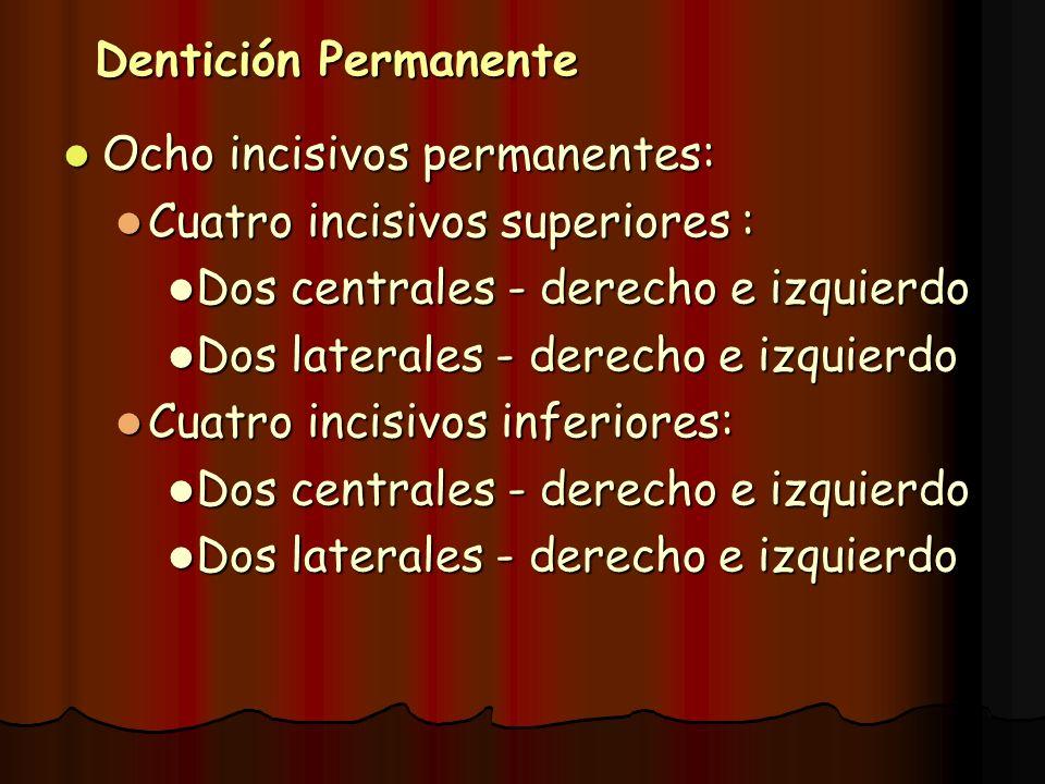 Dentición Permanente Ocho incisivos permanentes: Cuatro incisivos superiores : Dos centrales - derecho e izquierdo.