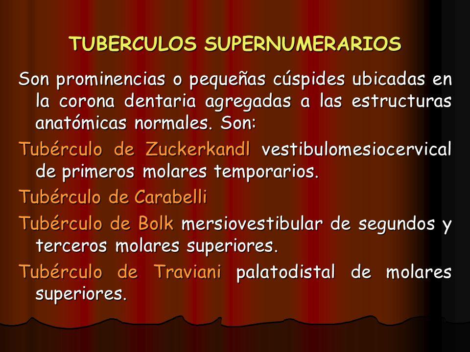 TUBERCULOS SUPERNUMERARIOS