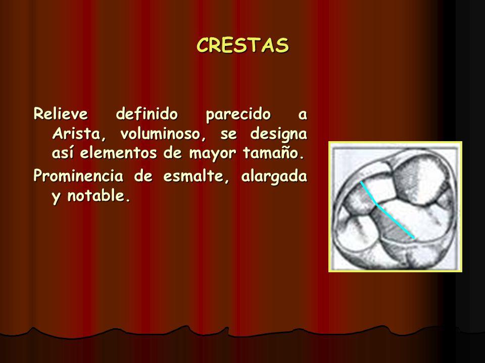 CRESTAS Relieve definido parecido a Arista, voluminoso, se designa así elementos de mayor tamaño.