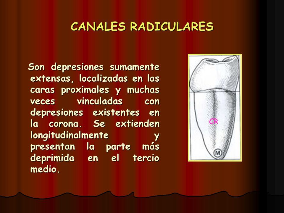 CANALES RADICULARES