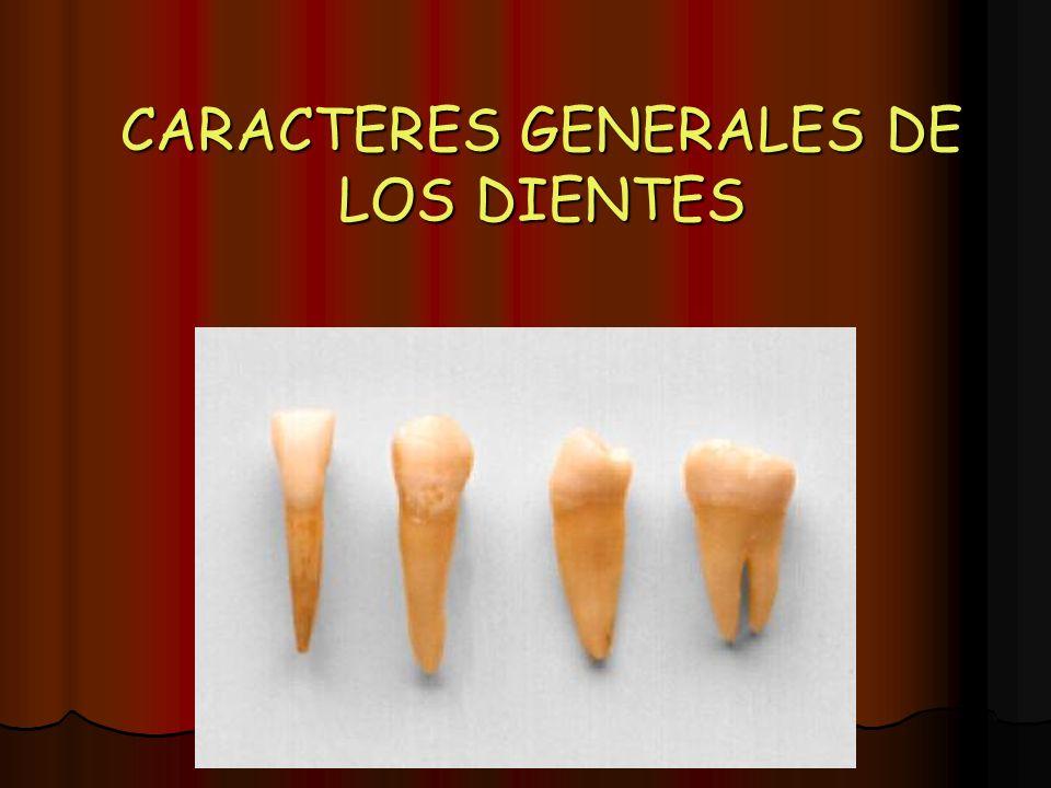 CARACTERES GENERALES DE LOS DIENTES