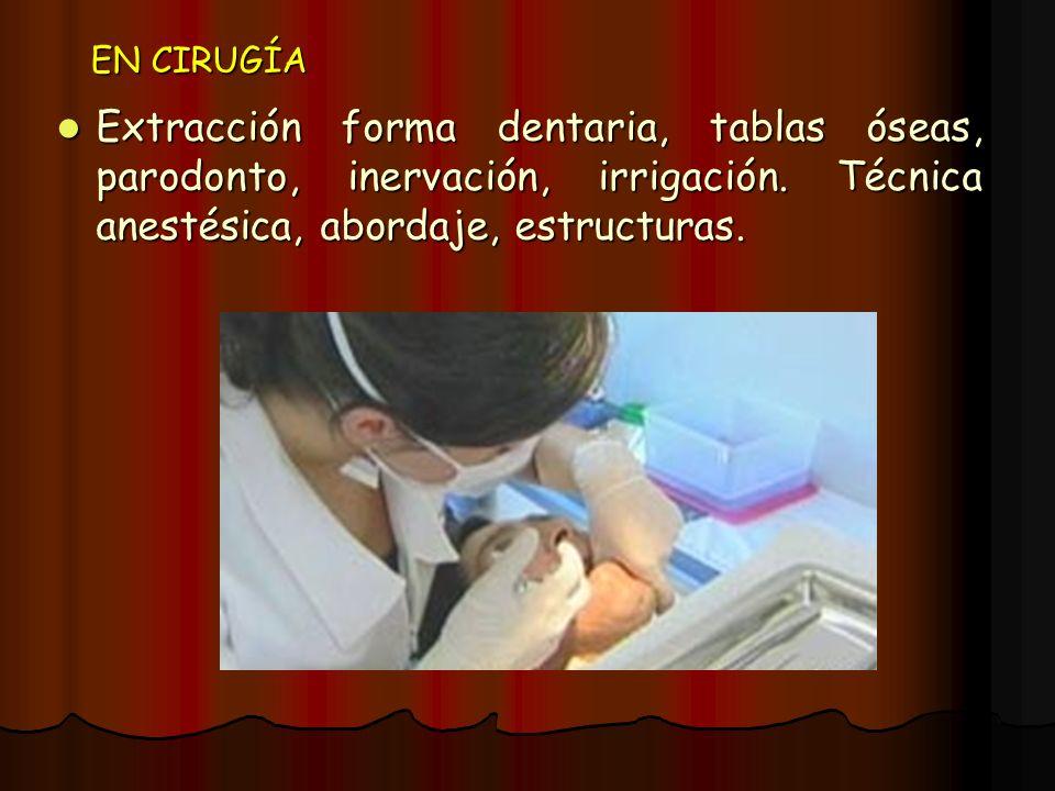 EN CIRUGÍA Extracción forma dentaria, tablas óseas, parodonto, inervación, irrigación.