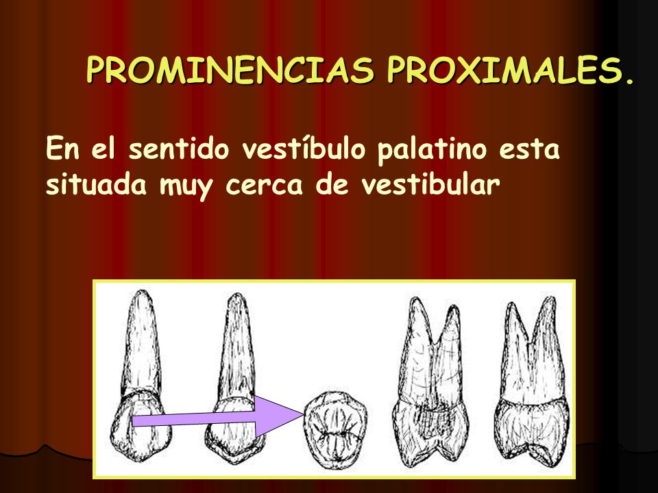 PROMINENCIAS PROXIMALES.
