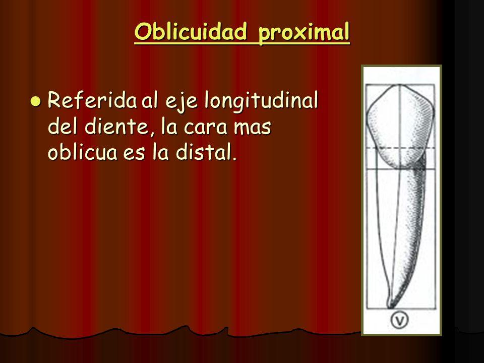 Oblicuidad proximal Referida al eje longitudinal del diente, la cara mas oblicua es la distal.