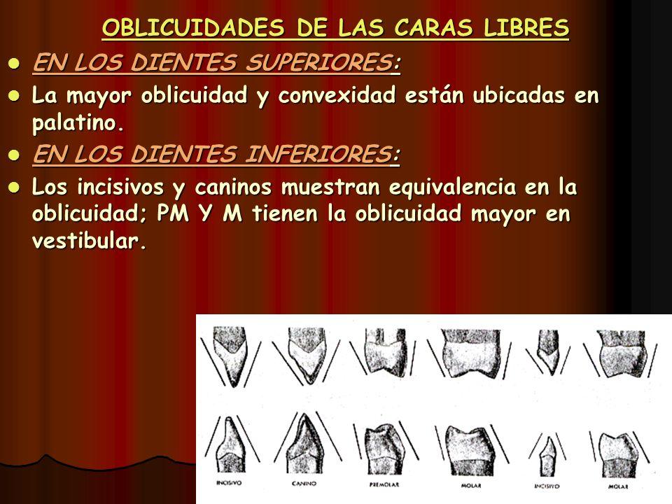 OBLICUIDADES DE LAS CARAS LIBRES