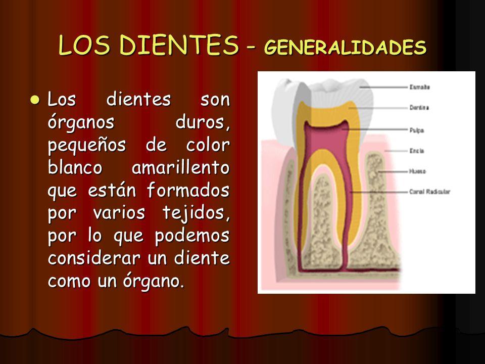 LOS DIENTES - GENERALIDADES