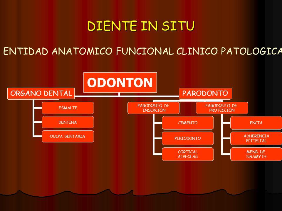 ENTIDAD ANATOMICO FUNCIONAL CLINICO PATOLOGICA