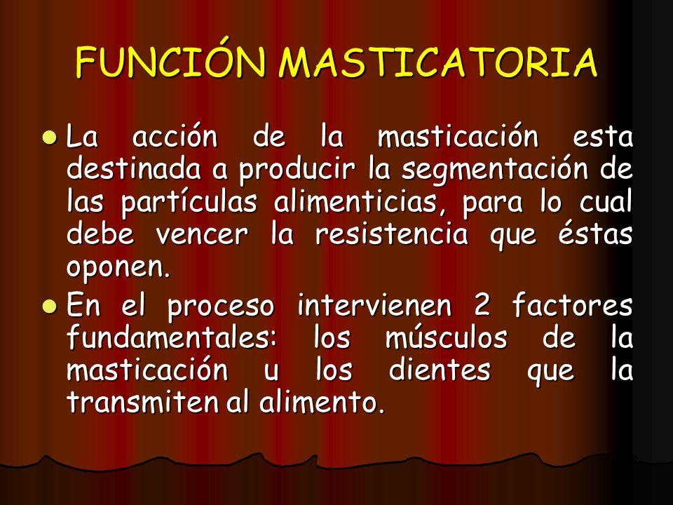 FUNCIÓN MASTICATORIA