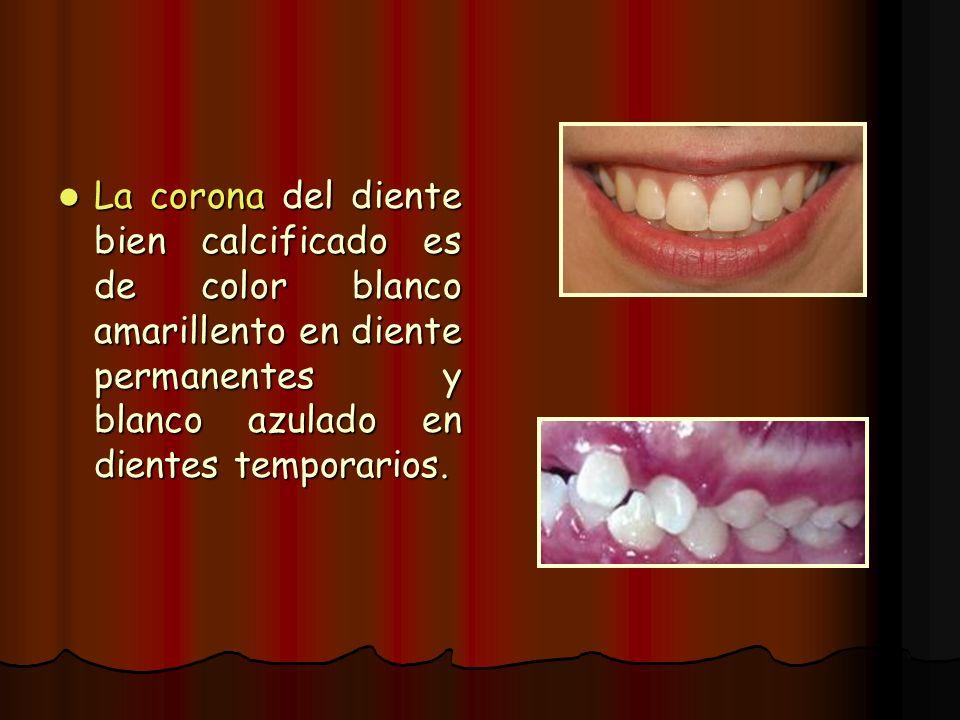 La corona del diente bien calcificado es de color blanco amarillento en diente permanentes y blanco azulado en dientes temporarios.