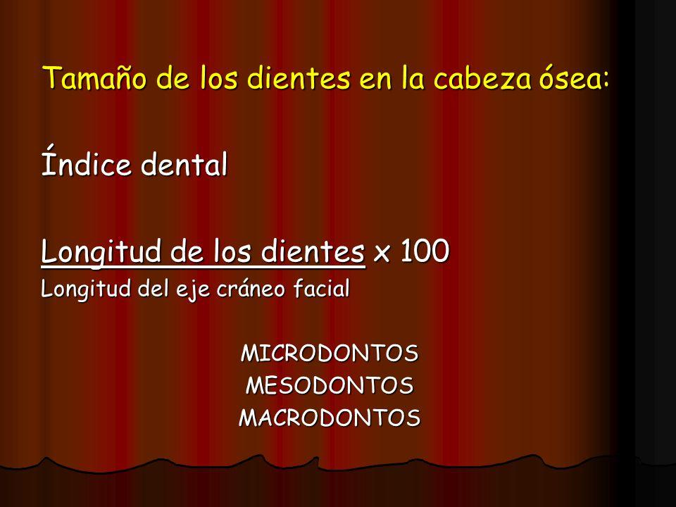Tamaño de los dientes en la cabeza ósea: Índice dental
