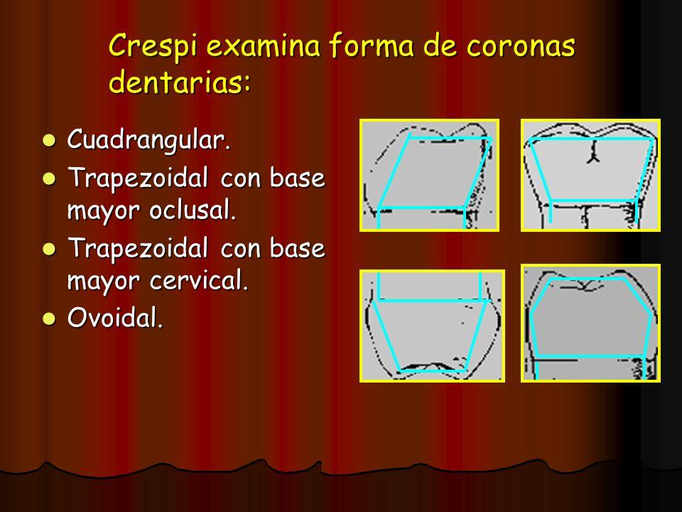 Crespi examina forma de coronas dentarias: