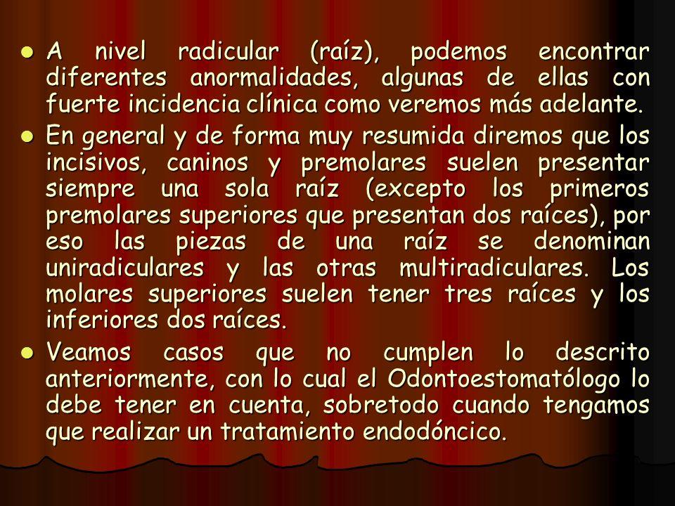 A nivel radicular (raíz), podemos encontrar diferentes anormalidades, algunas de ellas con fuerte incidencia clínica como veremos más adelante.