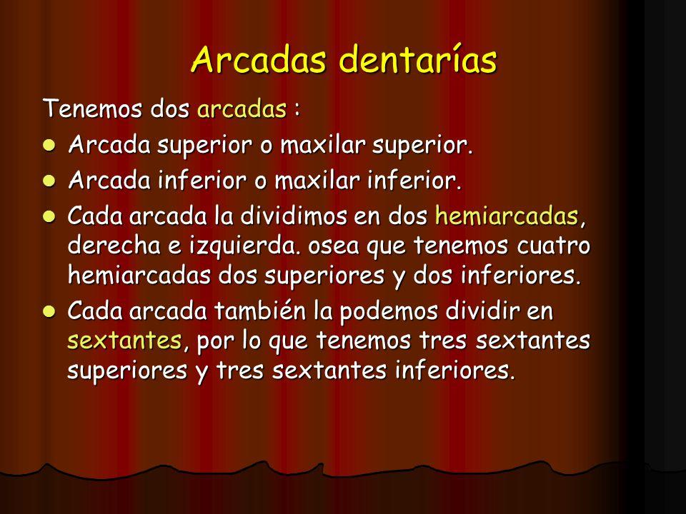 Arcadas dentarías Tenemos dos arcadas :