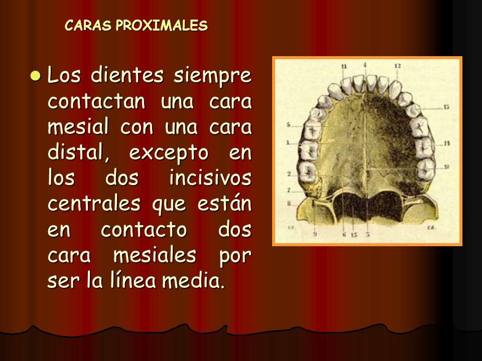CARAS PROXIMALES