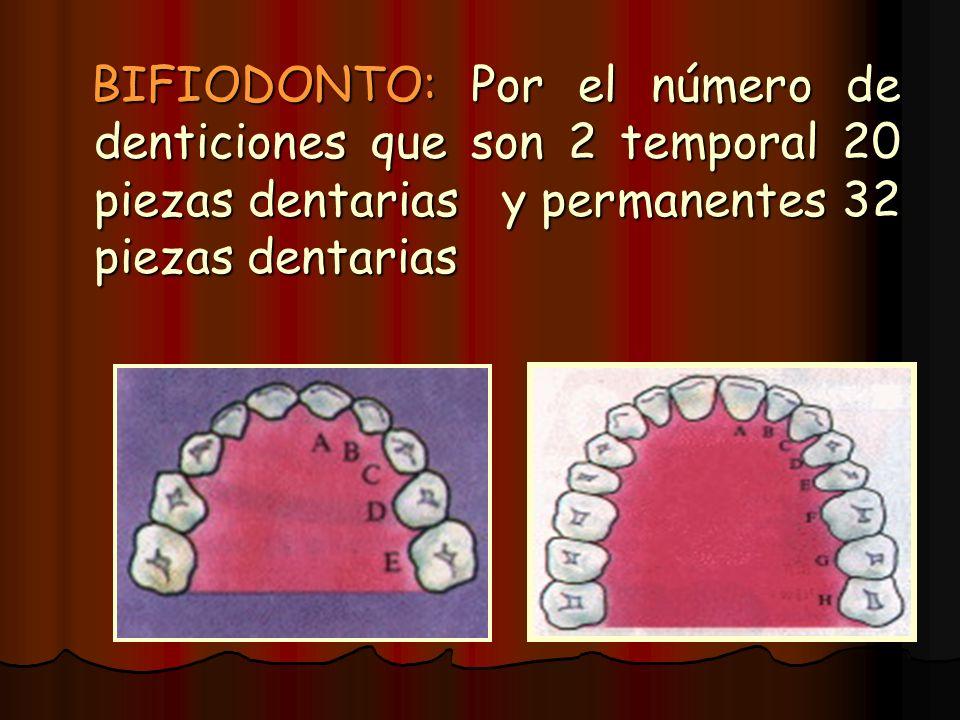 BIFIODONTO: Por el número de denticiones que son 2 temporal 20 piezas dentarias y permanentes 32 piezas dentarias