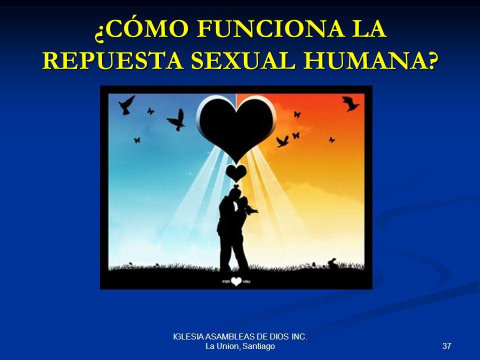 ¿CÓMO FUNCIONA LA REPUESTA SEXUAL HUMANA