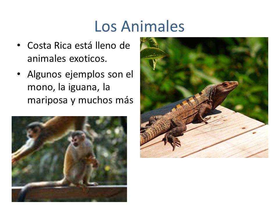 Los Animales Costa Rica está lleno de animales exoticos.