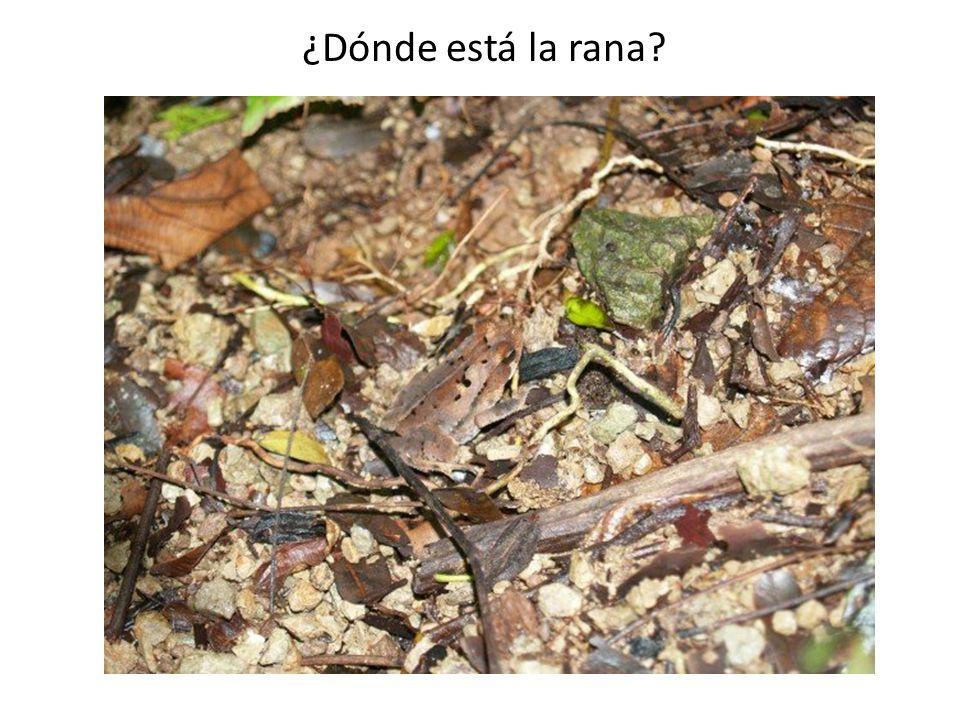 ¿Dónde está la rana