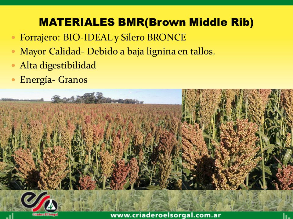 MATERIALES BMR(Brown Middle Rib)