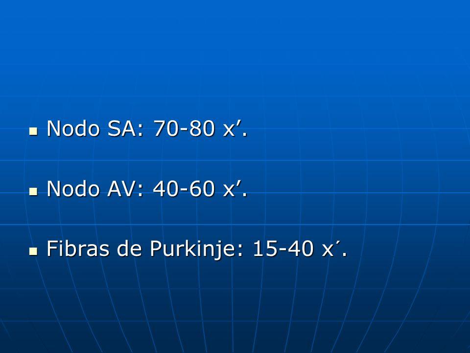 Nodo SA: 70-80 x'. Nodo AV: 40-60 x'. Fibras de Purkinje: 15-40 x´.