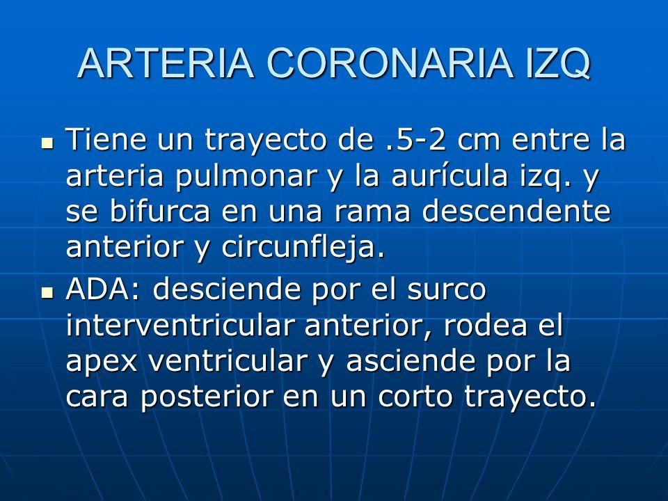 ARTERIA CORONARIA IZQ