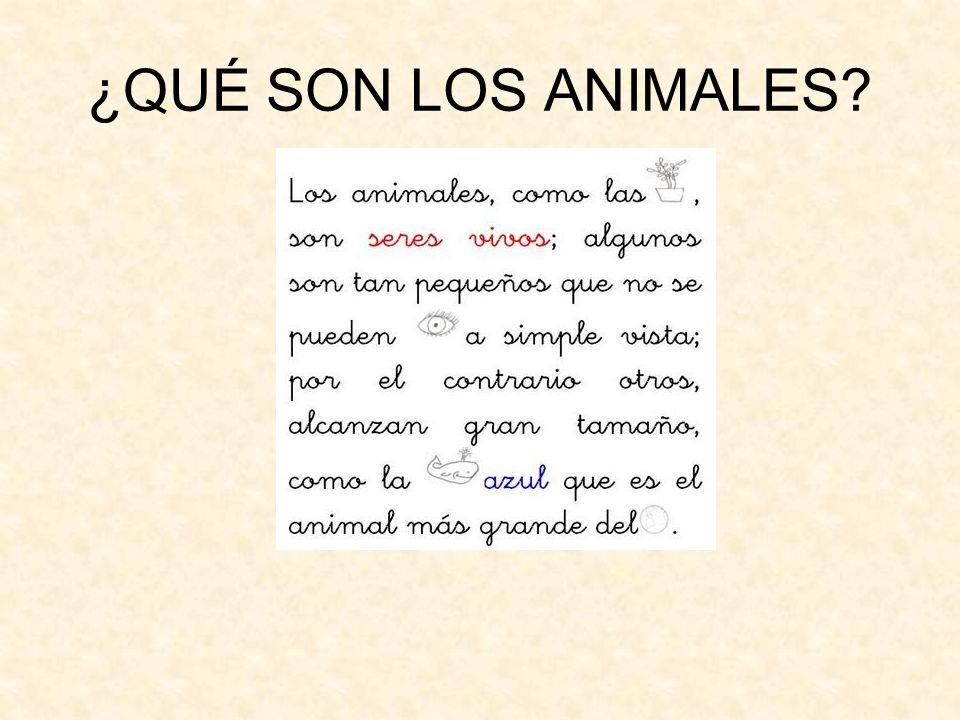 ¿QUÉ SON LOS ANIMALES