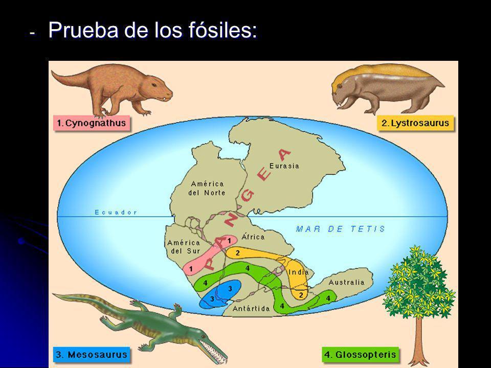Prueba de los fósiles: