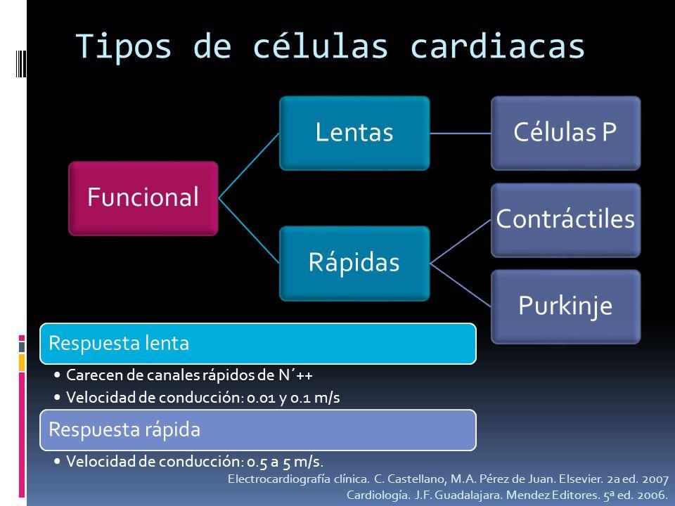 Tipos de células cardiacas