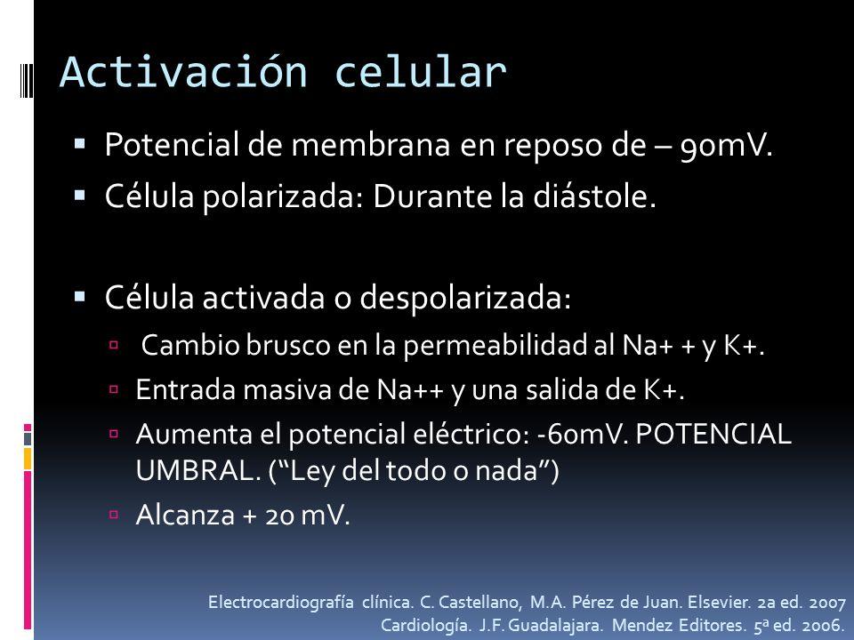 Activación celular Potencial de membrana en reposo de – 90mV.