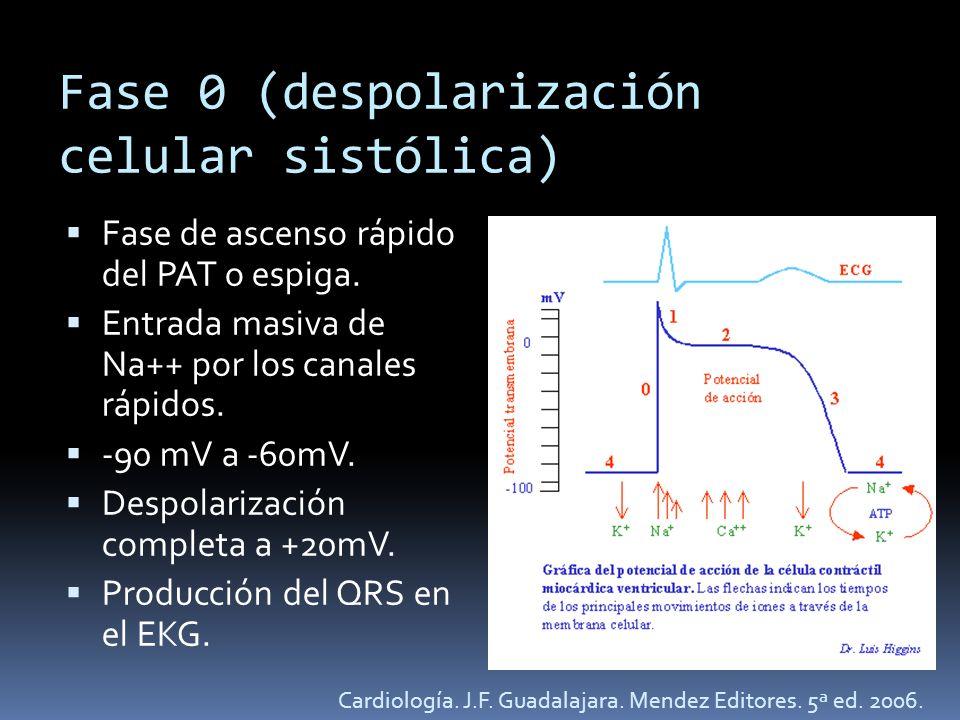 Fase 0 (despolarización celular sistólica)