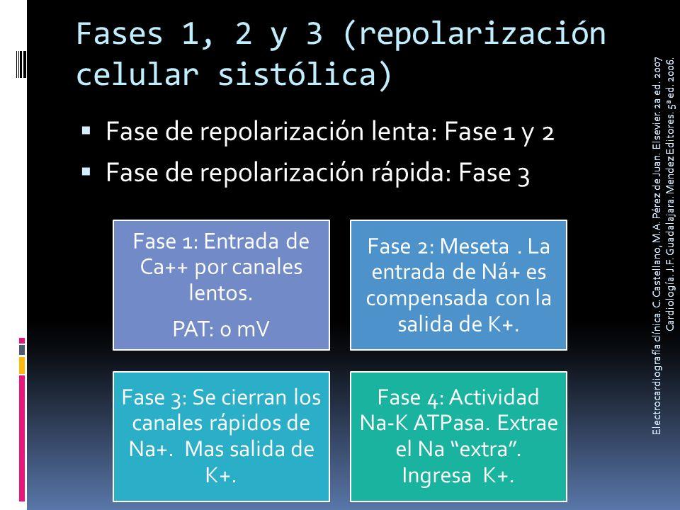 Fases 1, 2 y 3 (repolarización celular sistólica)