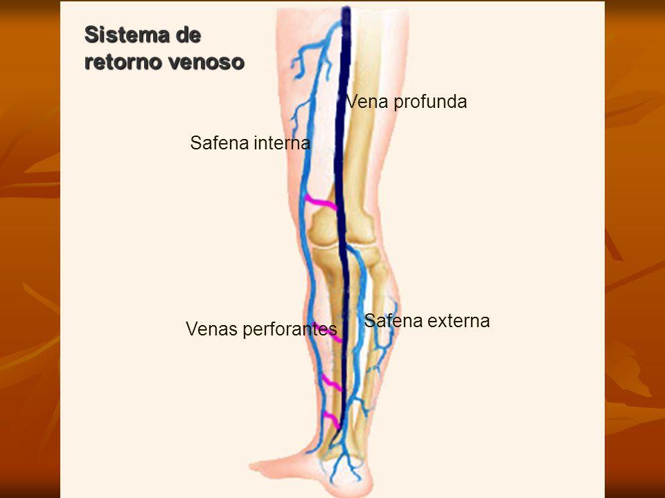 Perfecto Anatomía De La Vena Safena Menor Colección - Anatomía de ...