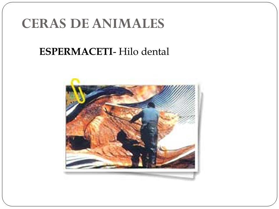 CERAS DE ANIMALES ESPERMACETI- Hilo dental