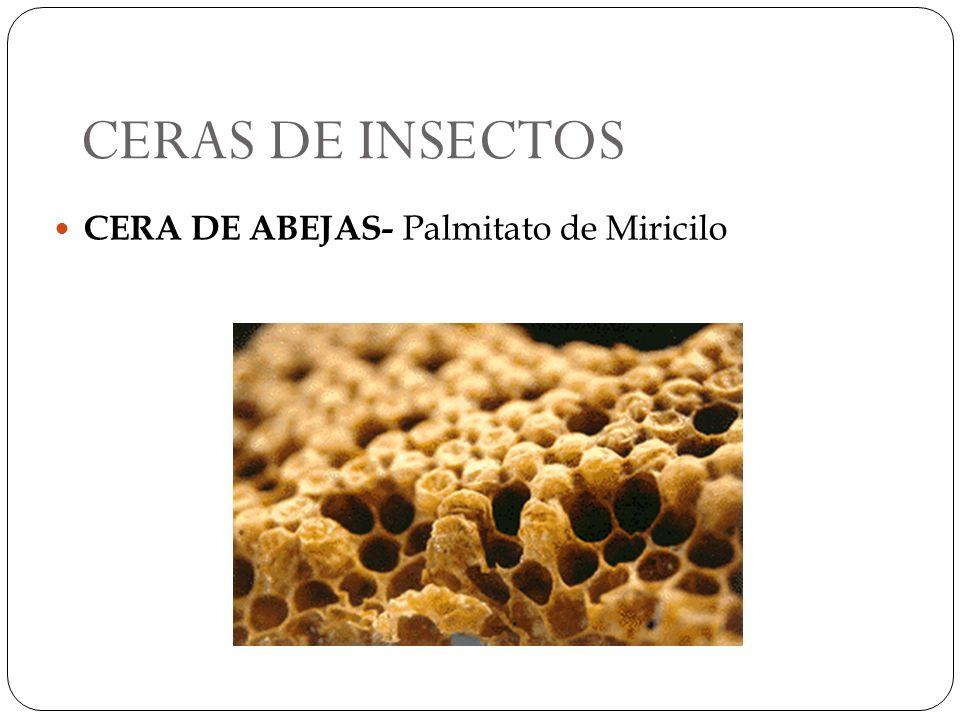 CERAS DE INSECTOS CERA DE ABEJAS- Palmitato de Miricilo